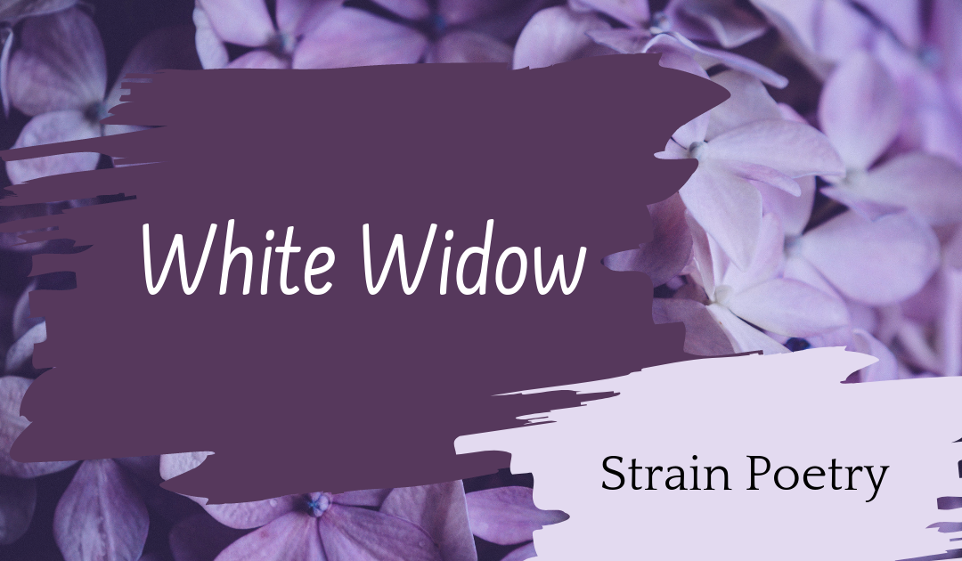 White Widow Poem
