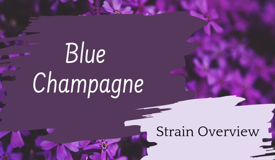 Blue Champagne Overview
