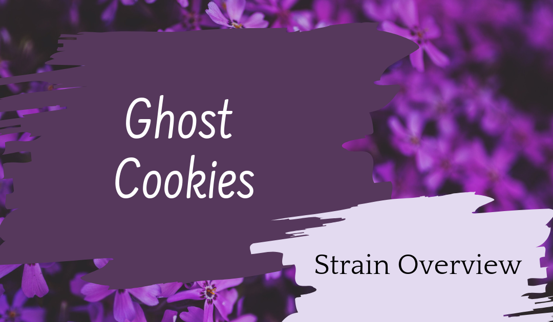 Ghost Cookies Overview
