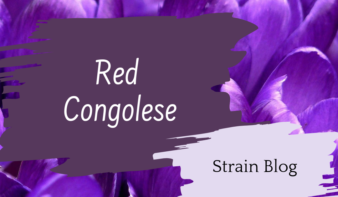Red Congolese Blog