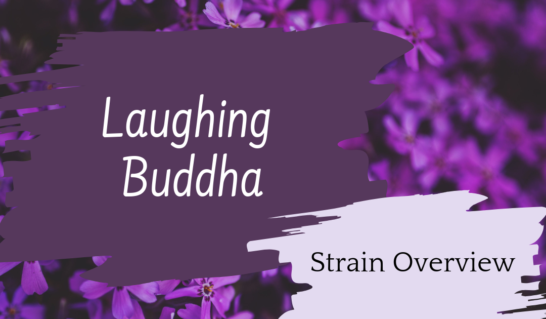 Laughing Buddha Overview