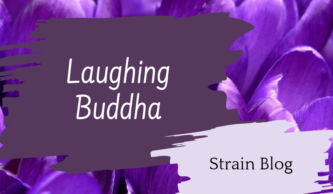 Laughing Buddha Blog