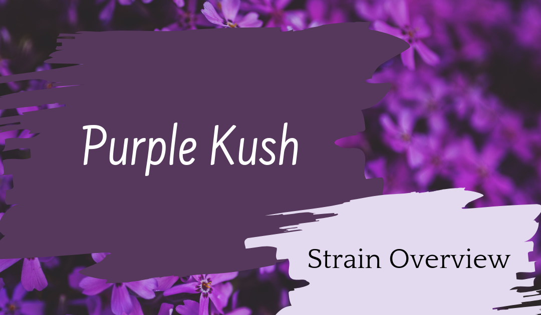 Purple Kush Overview