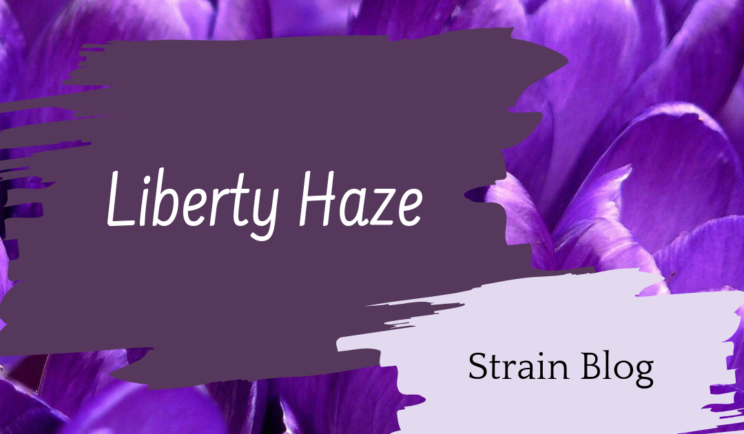 Liberty Haze Blog
