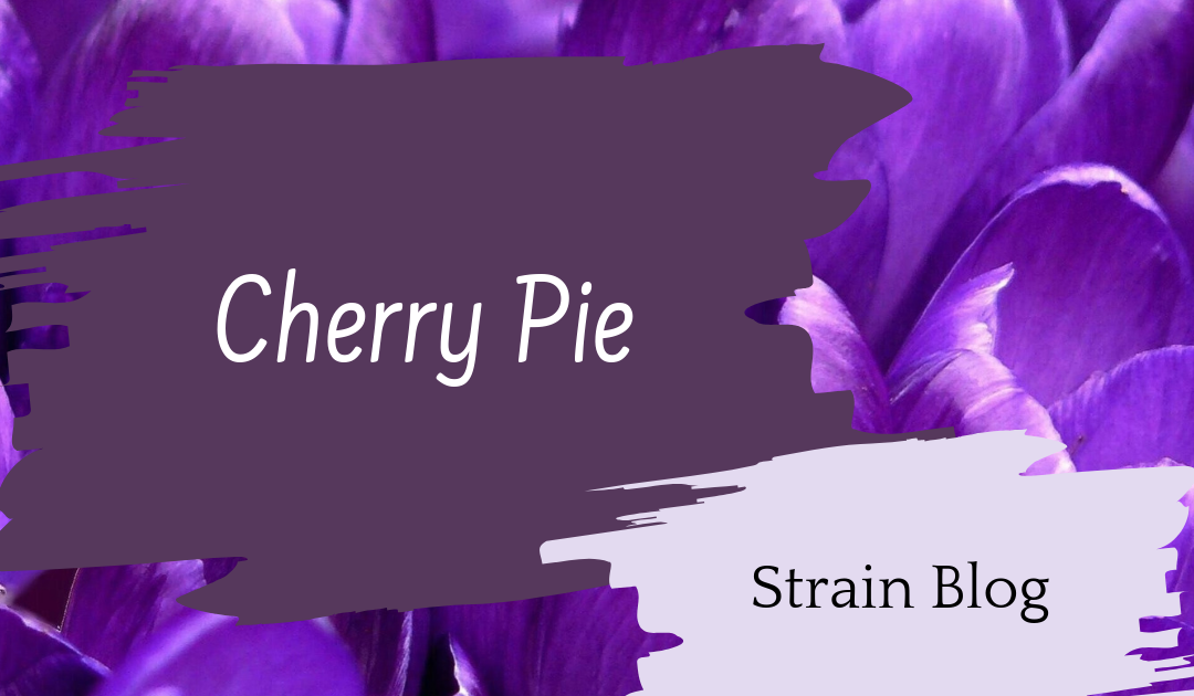 Cherry Pie Blog