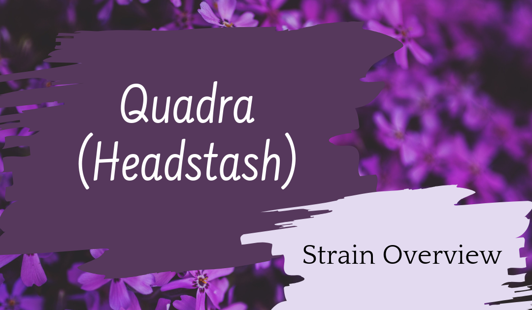 Broken Coast: Quadra (Headstash) – Review