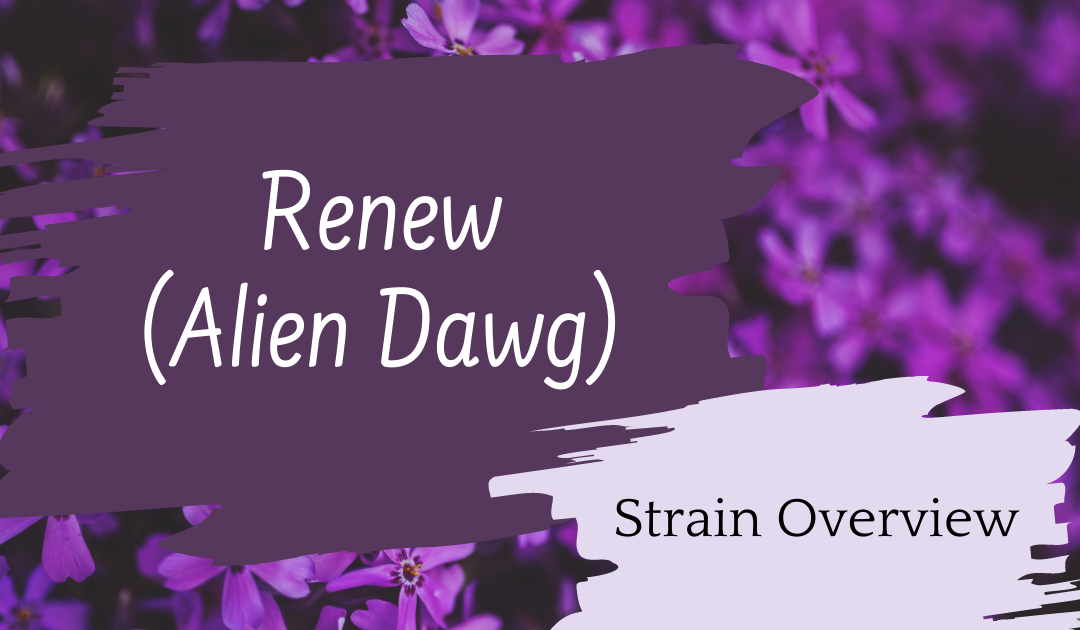 Solei (Aphria): Renew (Alien Dawg) Review